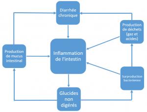 breaking the vicious cycle, Elaine Gottschall, régime gs, regime en glucides specifique, mici, maladie de crohn, chrone, rch, colite ulcereuse, rectocolite hémorragique, diarrhée, diaré, celiac, coeliac, cystic, maladie inflamatoire, syndrome de l'intestin irritable