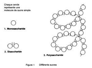 sucre simple, sucre complexe, sucre lent, feculent, chaine de sucre, mono saccharide, di saccharide, poly saccharide